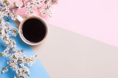 Free Top View And Flat Lay Of Cup Of Coffee And Blossoming Tree Branch On Pink And Blue Background. Place For Text. Copyspace Royalty Free Stock Images - 114533529