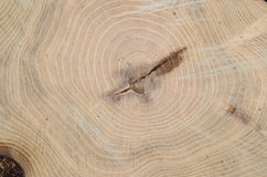 Top view of the annual rings of cut tree closeup Stock Photography
