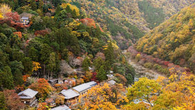 Top view of Arashiyama at fall Stock Image