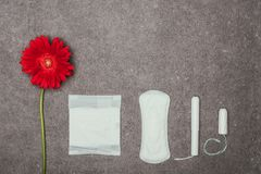 Top view of arrangement of red flower, menstrual pads and tampons. On grey surface royalty free stock image