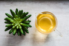 Top View of artificial cactus and green tea Royalty Free Stock Image