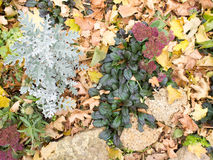 Top view of the autumn flowerbed Stock Image