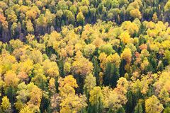 Top view of autumn forest Stock Photo