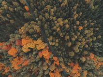 Top view of autumn forest Royalty Free Stock Image