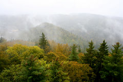 Top view of autumn forest Royalty Free Stock Photos