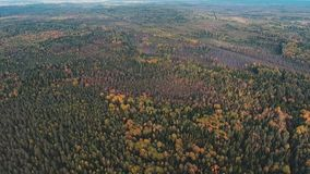 Top view of the autumn forest stock video