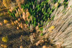 Top view of autumn forest trees.  stock photo