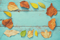Top view of autumn golden leaves on blue wooden background. Royalty Free Stock Photography