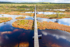 Top view of autumn landscape. Huge bog in Estonia stock images