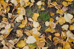 Top view on autumn leaves laying on green grass stock photos
