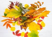 Top view of autumn yellow, red and green leaves Royalty Free Stock Photos