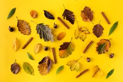 Composed leaves on orange background. Top view of autumnal colorful leaves arranged with cinnamon sticks and acorns on orange stock image