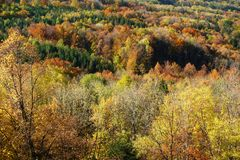 Top view of autumnal forest Royalty Free Stock Photos