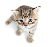 Top view of baby cat kitten Stock Photography