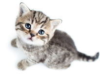 Top view of baby cat kitten. On white background royalty free stock photography