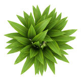 Top view of bamboo plant in pot isolated on white stock illustration