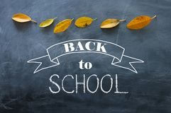 Top view banner of text sketch BACK TO SCHOOL with autumn gold dry leaves over classroom blackboard background.  royalty free stock photo