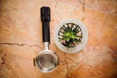 Top view of baristas temper and green plant in concrete pot Stock Photo