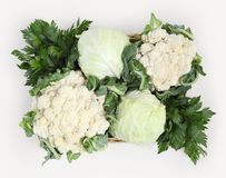 Free Top View Basket Of Cabbage, Cauliflowers And Celery Isolated On Royalty Free Stock Photography - 99575537