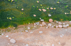 Top view of a beach with sand and stones in water and green emerald water with seaweed. Stock Photos