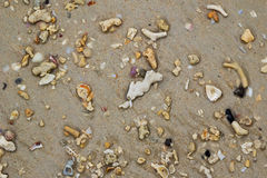 The top view on the beach with stones and seashells on sand. Stock Photos