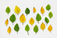 Top view of beautiful autumn leaves on white background Royalty Free Stock Photo