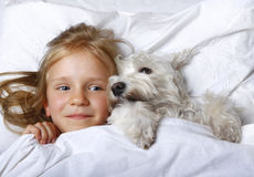 Top view of beautiful blonde little girl lying with white schnauzer puppy dog on white bed. Friendship concept. Top view of beautiful blonde little girl lying Royalty Free Stock Photography