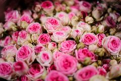 Top view of bouquet of flowers consisting of pink and white roses. Top view of beautiful bouquet of flowers consisting of bright pink and white roses in a flower Stock Photos