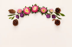 Top view of beautiful colorful flowers on white background Royalty Free Stock Photos