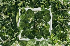 Top view of beautiful fresh green leaves and plants in white frame. On white Stock Image