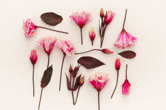Top view of beautiful pink flowers on white background Stock Photography