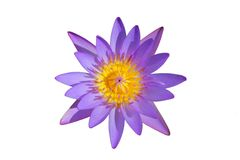 Top view beautiful purple water lily isolated on white background Royalty Free Stock Photography