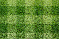 Top view of Beautiful square tone lawn Stock Photography