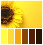 Top view of beautiful sunflower with space for text on yellow background. Natural color palette for interior or fashion design. And art stock photography