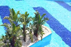 Top view of beautiful swimming pool with nature green exotic palm trees.Summer vacation and travel concept. Copy space royalty free stock photography