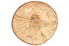 Top view of beech tree stump isolated on white background Stock Photography