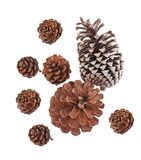 Top view of Big set cones various coniferous trees isolated on white background royalty free stock image