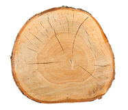Top view of a birch stump Stock Images
