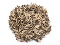 Black barley seeds. Top view of black barley seeds isolated on white background Royalty Free Stock Photography