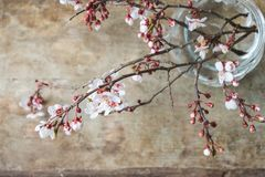 Top view of blooming pink and white spring tree branches on wooden background. Top view of a glass vase and blooming spring tree branches with white and pink stock photography