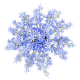 Top view of blue flowers in vase isolated on white Stock Photo