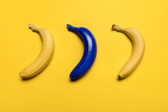 Top view of blue and yellow bananas isolated on yellow Royalty Free Stock Photos