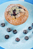 Top view blueberry muffin with icing sugar Royalty Free Stock Photo