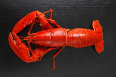 Top view of Boiled Atlantic Lobster Royalty Free Stock Image