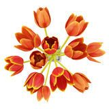 Top view bouquet of orange tulips in vase isolated on white. Background Stock Image