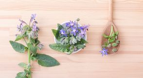 Bowl and spoon with starflower. Top view of Bowl and wooden spoon with Borage on a wooden background Stock Photography