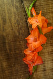 Top View of Branch Gladiolus Flower on Wooden Background Royalty Free Stock Photo