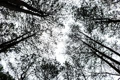 Top of view branches. In the forest stock photos