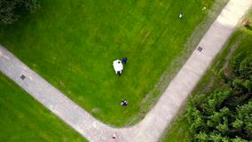 Top view of bride and groom walking on green lawn. Action. Wedding walk on green summer lawn before ceremony of stock video