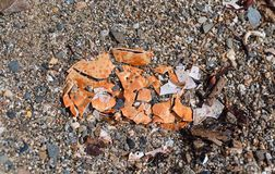 Top view of a broken crab shell on a rocky beach. A broken sun bleached crab shell on a gravel beach stock image